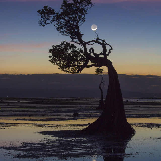 """""""Dancing tree with the moon"""" stock image"""