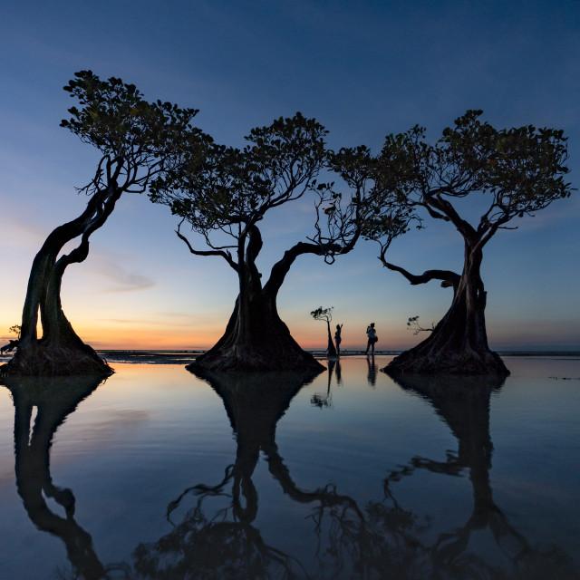 """The love tree"" stock image"
