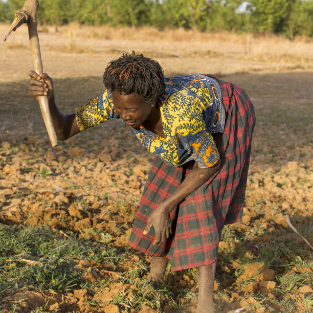 """""""Women's cooperative member digging a field in Karsome, Togo."""" stock image"""