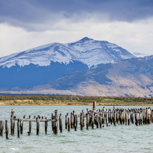 """Gaffos Pier, Admiral Montt Gulf, Puerto Natales, Ultima Esperanza Province,..."" stock image"