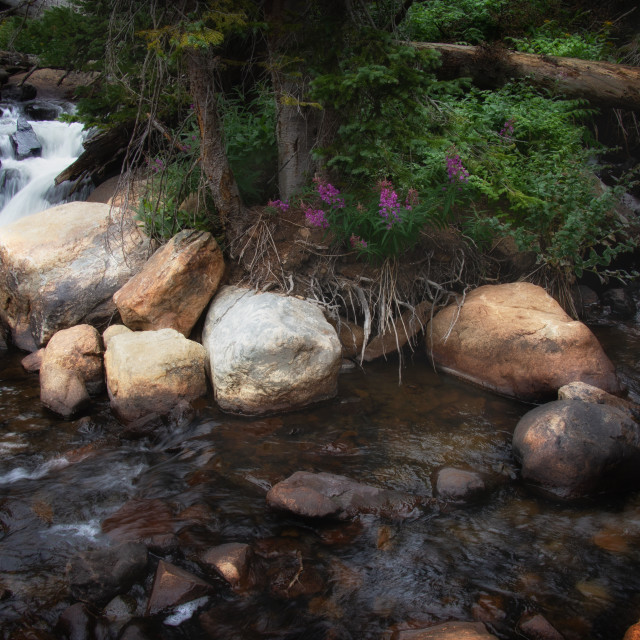"""South St Vrain Creek II"" stock image"