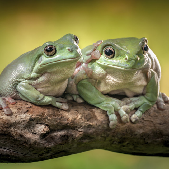 """""""Friendship of the green-frog"""" stock image"""