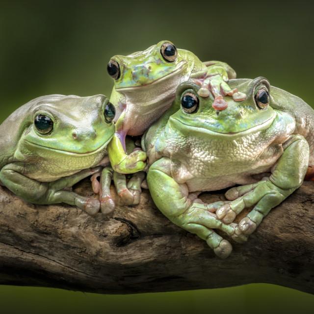 """three happy buddy"" stock image"