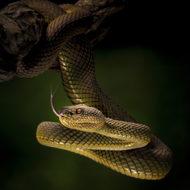 """""""The green and yellow snake"""" stock image"""