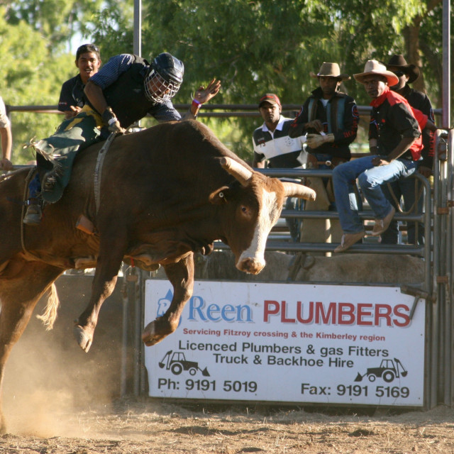 """A bum steer - an unforgettable bull ride in northern Australia"" stock image"