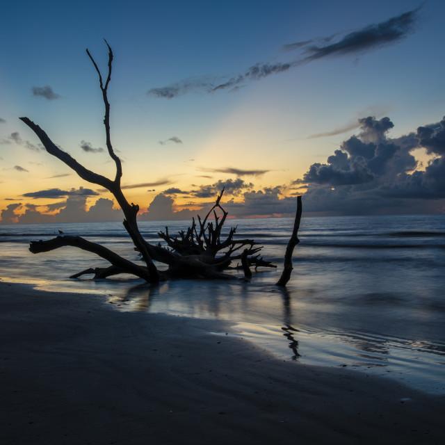 """""""Sunrise at the Boneyard"""" stock image"""