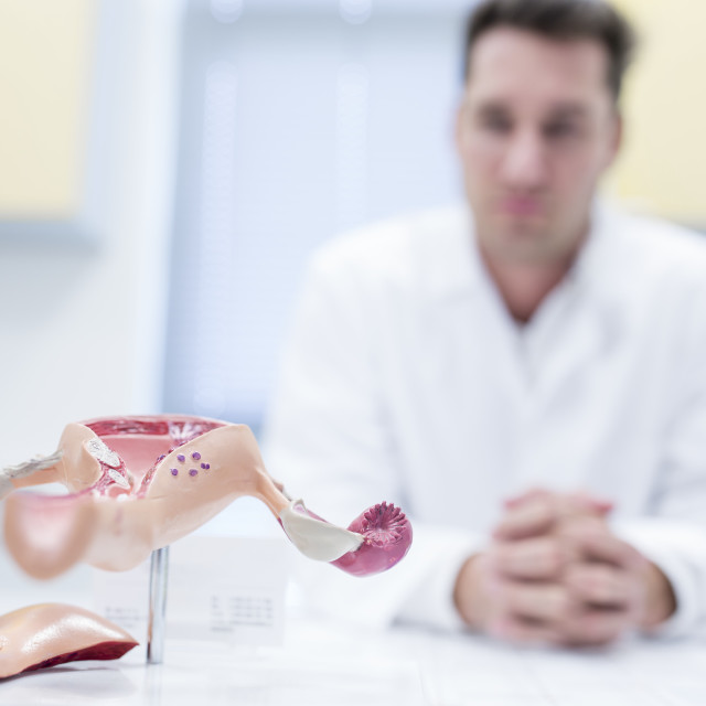 """""""Model of the female reproductive tract"""" stock image"""