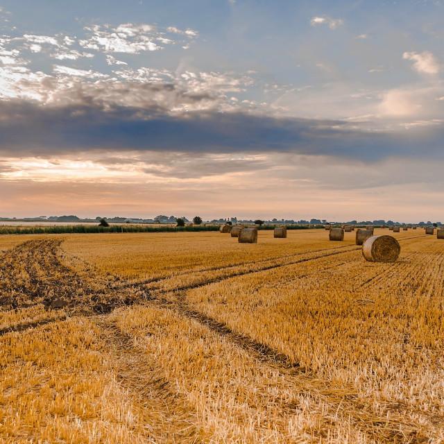 """Harvest field"" stock image"