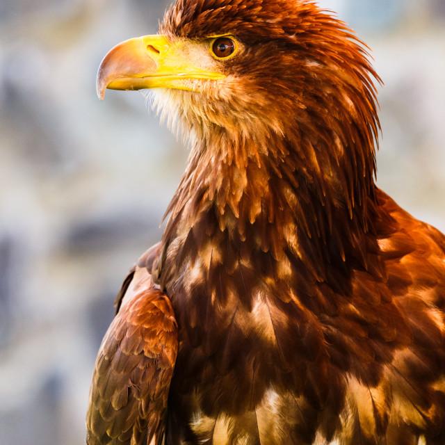 """""""Eagle Eyed"""" stock image"""
