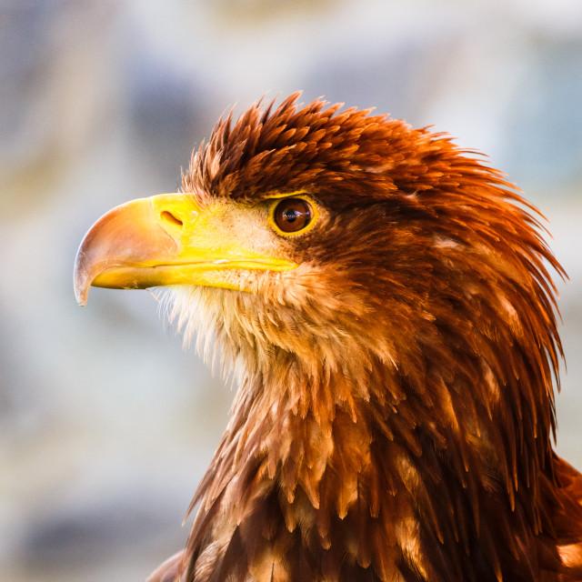 """""""Eagle Eyed 2"""" stock image"""