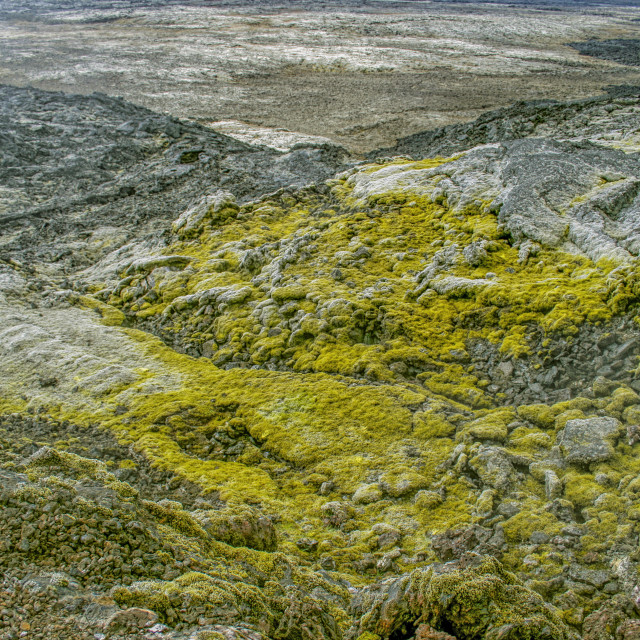 """""""lava landscape with moss"""" stock image"""