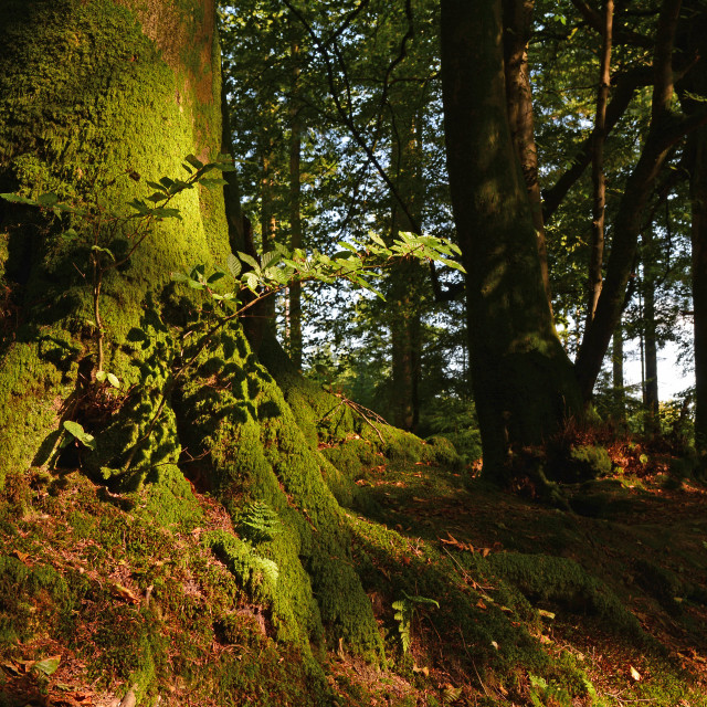"""""""In The Blackdown Hills Wood"""" stock image"""