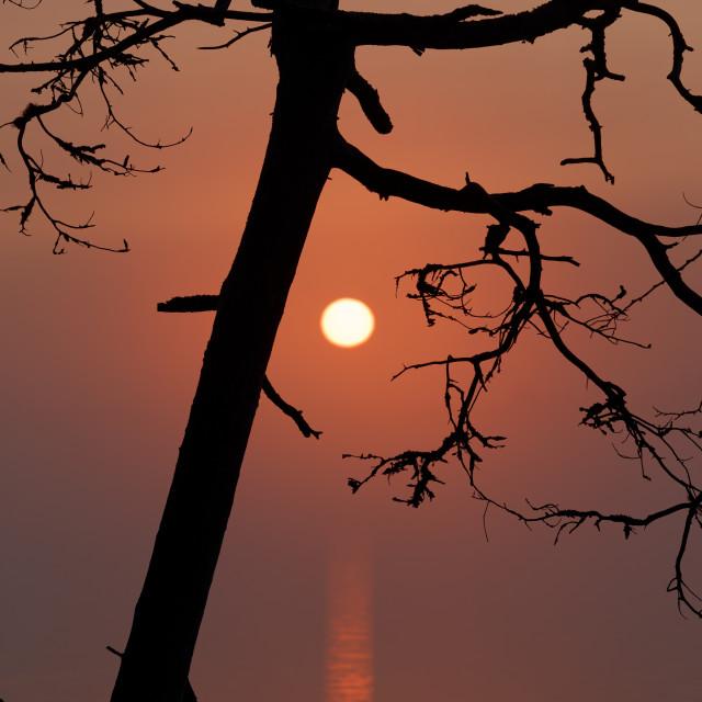 """Dead tree at sunrise"" stock image"
