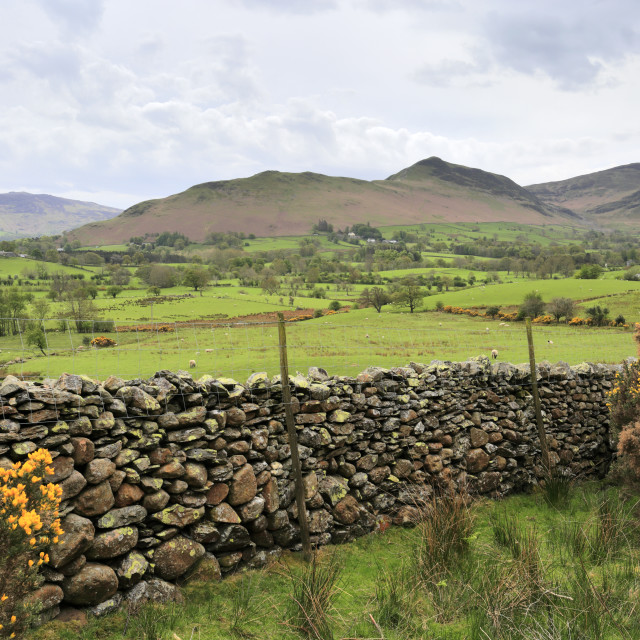 """""""Summer view of Newlands Valley, Allerdale, Lake District National Park,..."""" stock image"""