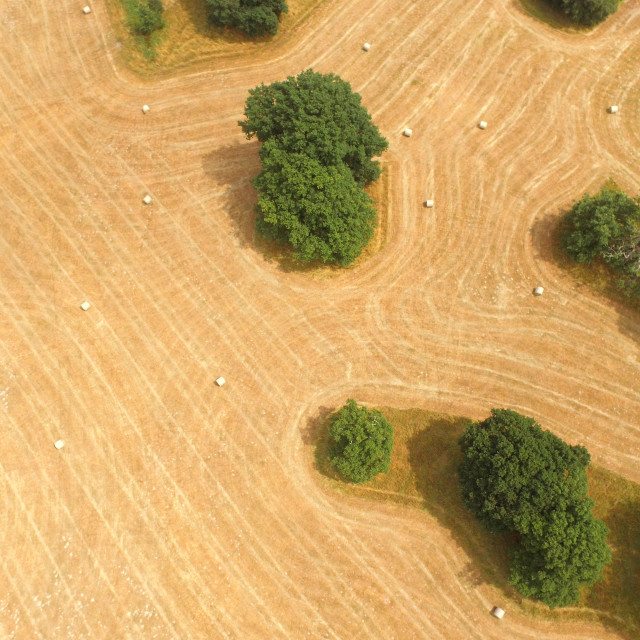 """Aerial view of a hay field."" stock image"