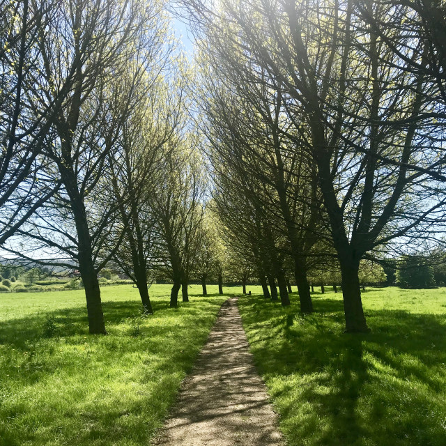 """""""Tree lined path"""" stock image"""