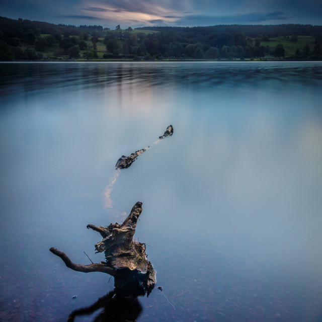 """Fallen Sapling in Lake"" stock image"