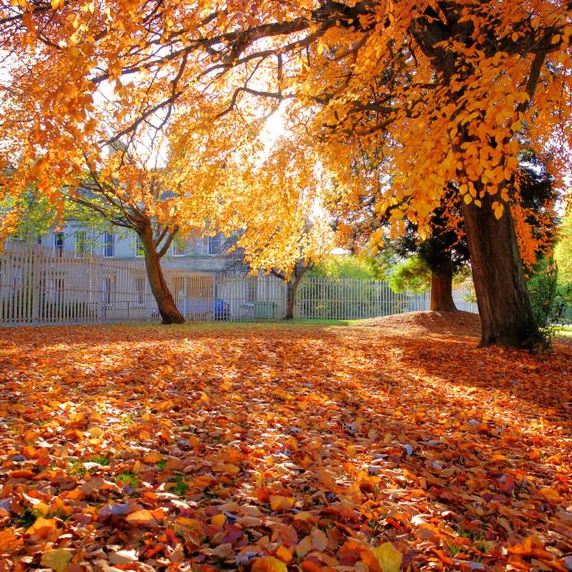 """Autumn Trees"" stock image"