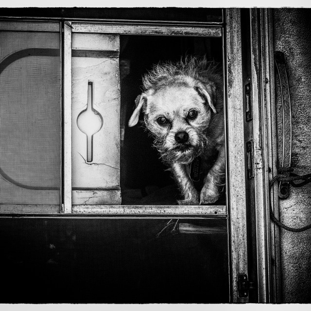 """Homeless Dog in monochrome"" stock image"