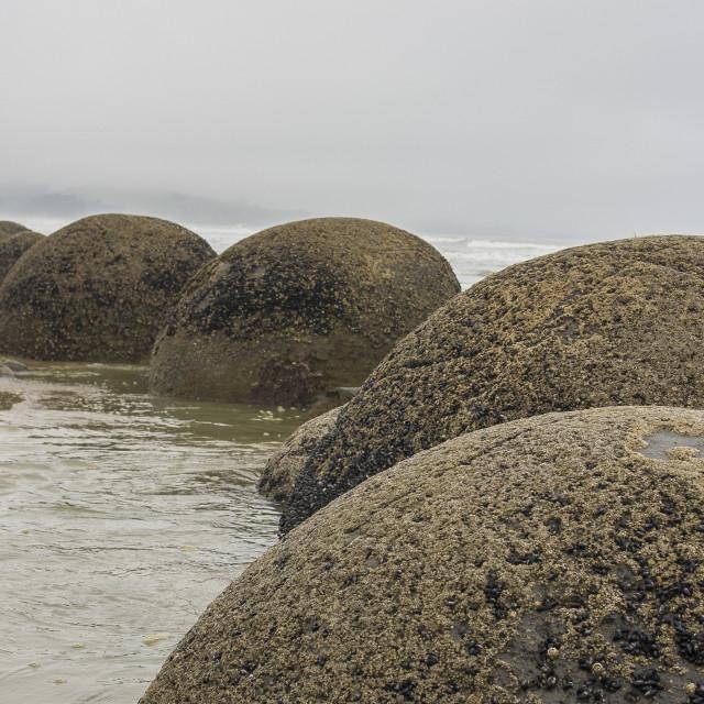 """""""Moeraki boulders"""" stock image"""