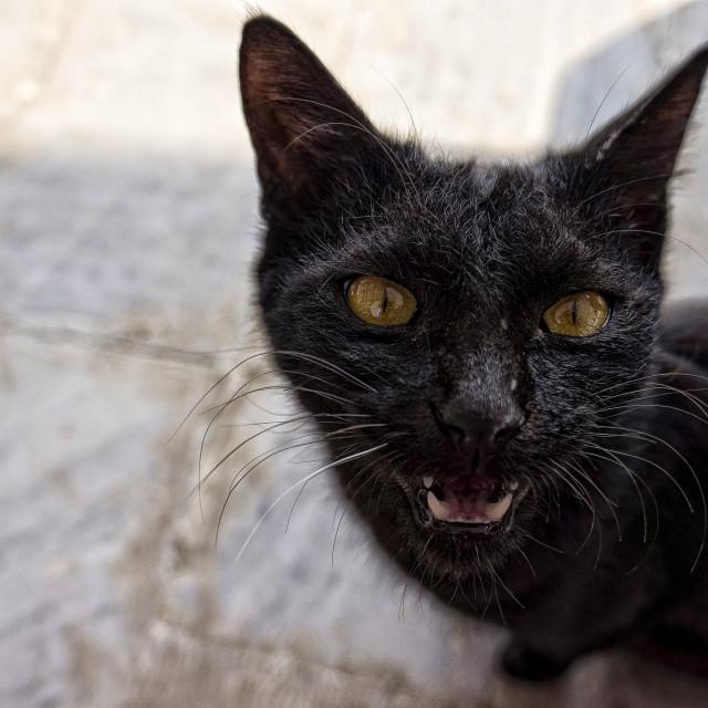 """""""Pushkar Cat"""" stock image"""