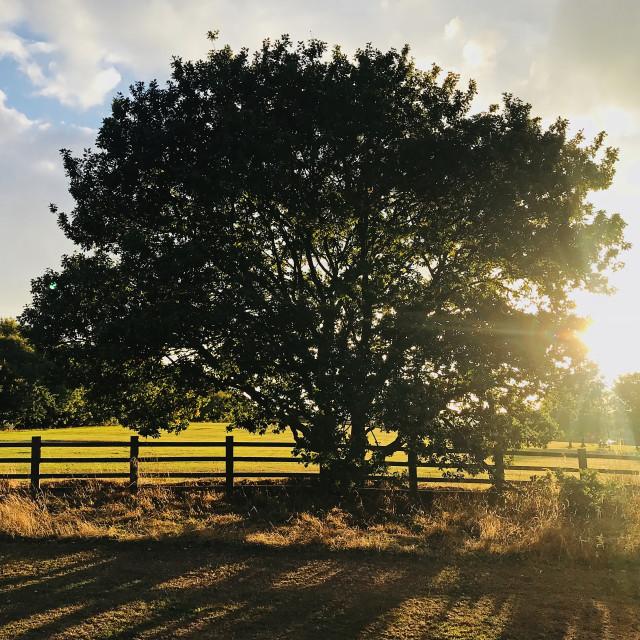 """Tree at twilight"" stock image"