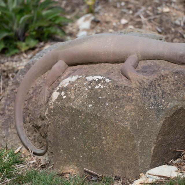 """Stone Lizard"" stock image"
