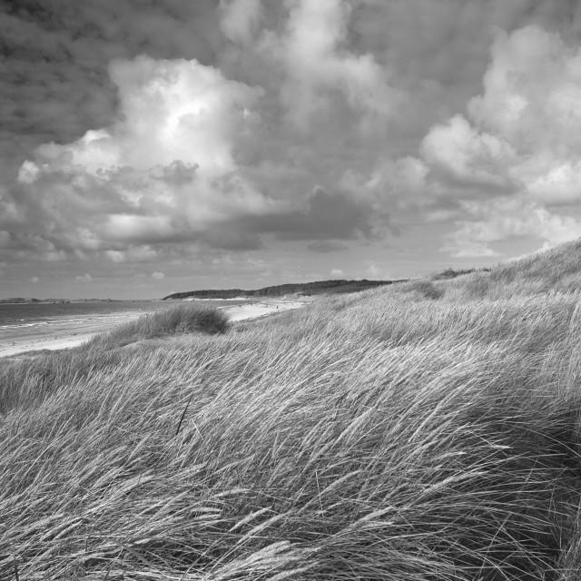 """""""Marram Grass, Newborough Beach"""" stock image"""