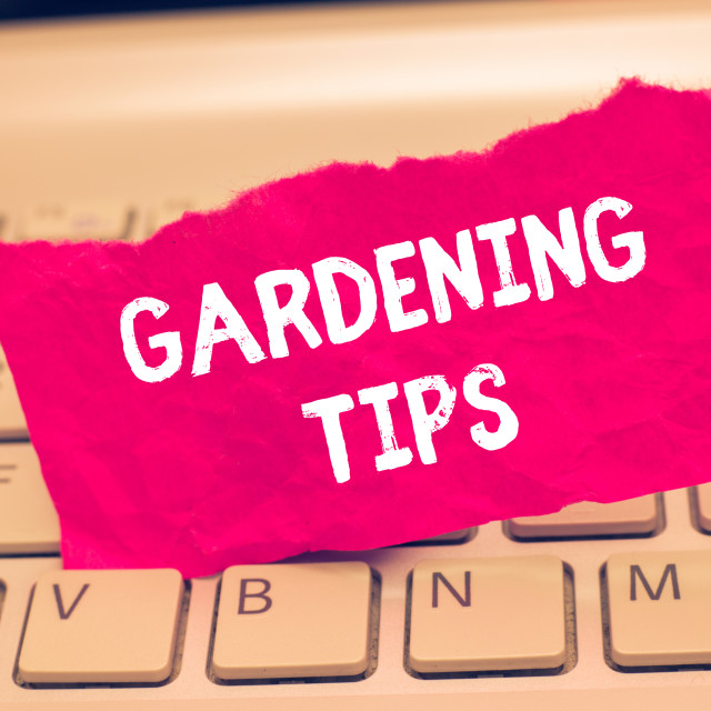 """""""Conceptual hand writing showing Gardening Tips. Business photo text Proper..."""" stock image"""
