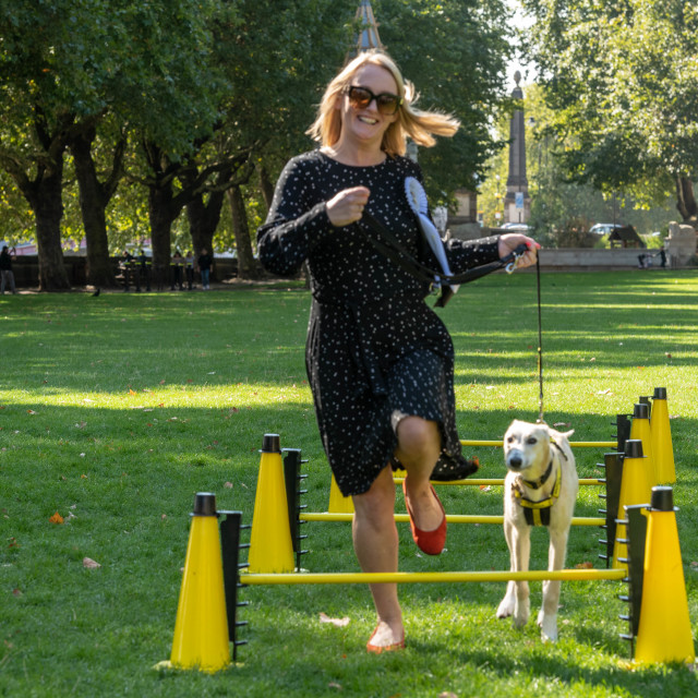 """Westminster Dog of the year event in London"" stock image"