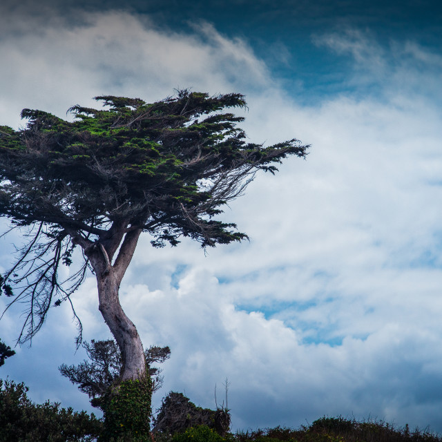 """""""Lone Tree with Cloudscape"""" stock image"""