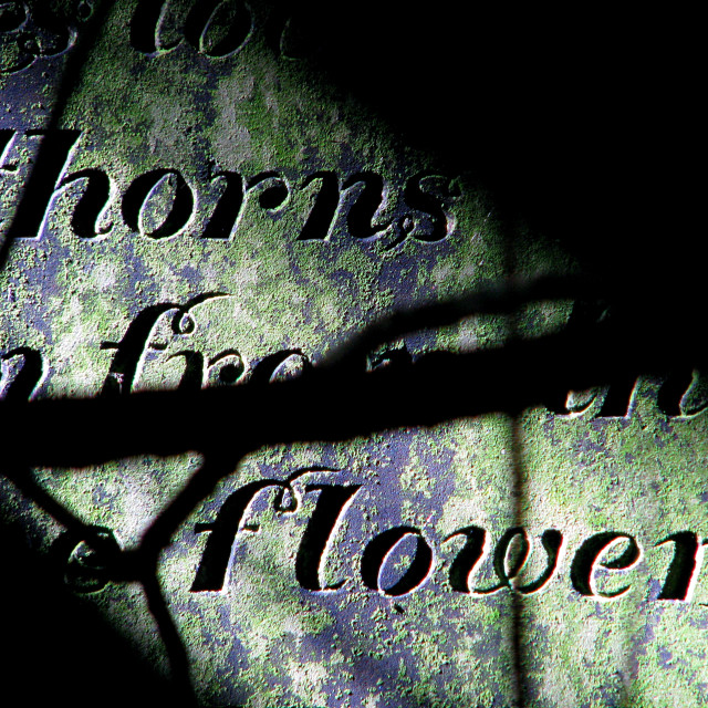 """Thorns And Flowers"" stock image"