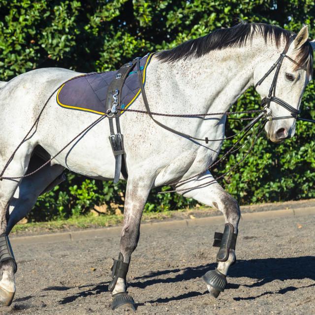 """""""Horse Sand Arena Closeup"""" stock image"""