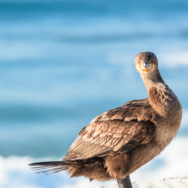 """Darter Bird Perched Ocean"" stock image"