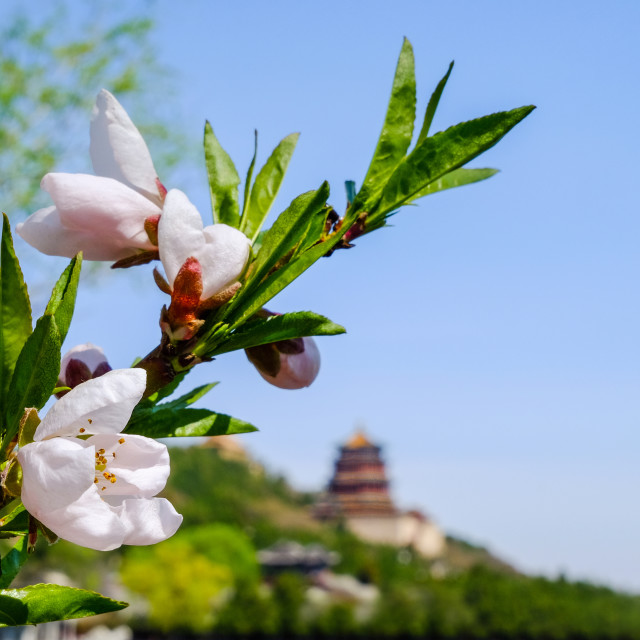 """Spring at the Summer Palace"" stock image"