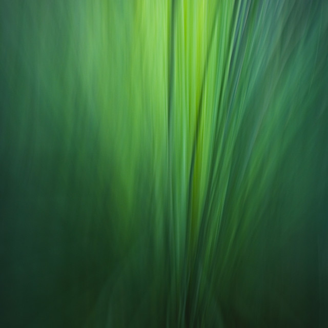 """""""Grass Tree Abstract"""" stock image"""