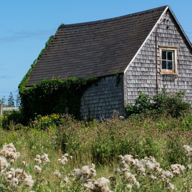 """Ramshackle Cape Tryon Barn"" stock image"