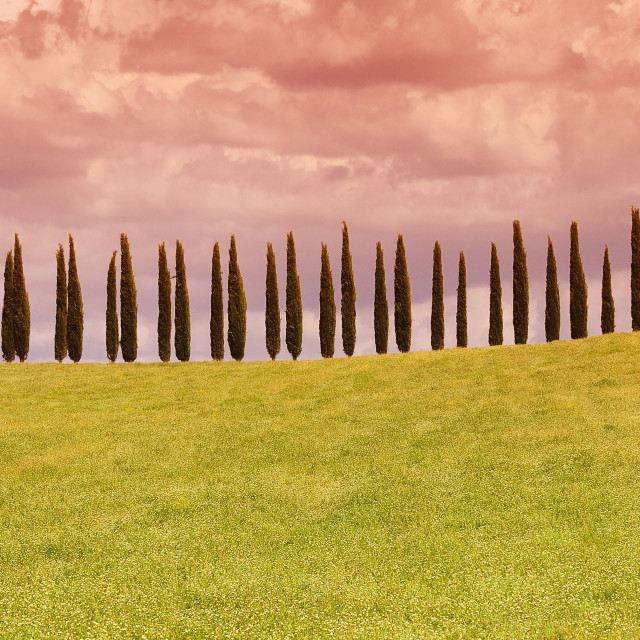"""Typical tuscan countryside with cypress."" stock image"