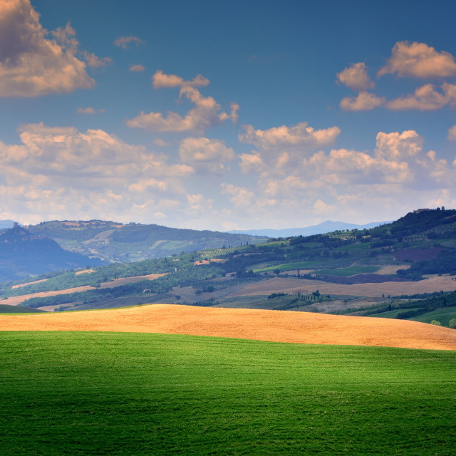 """Tuscany rural sunset landscape, green field."" stock image"