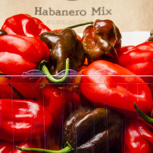 """""""Habanero mix"""" stock image"""