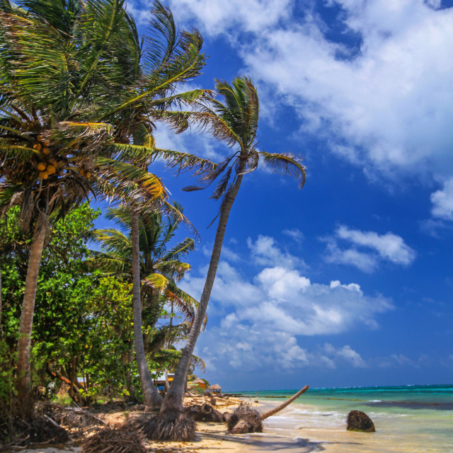 """Palm trees & beach"" stock image"