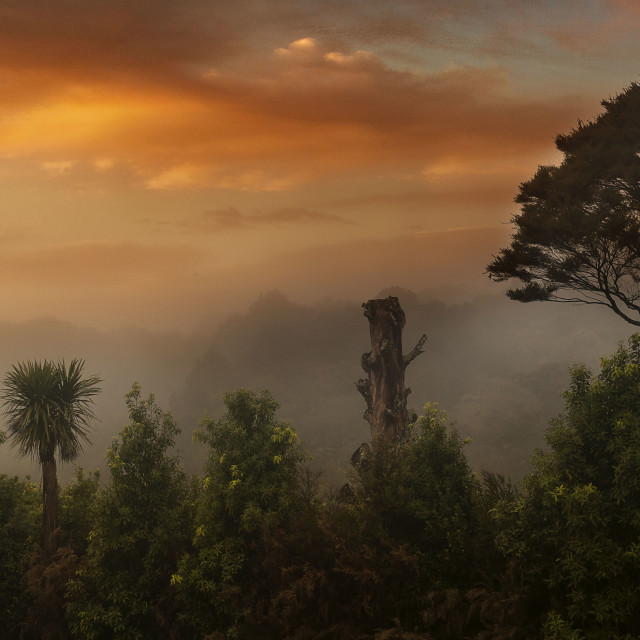 """foggy sunrise"" stock image"