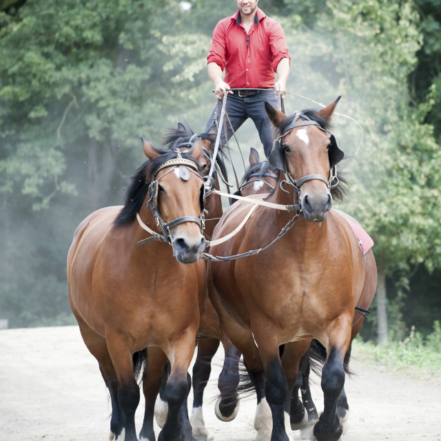"""La Michaudière Standing on 4 horses"" stock image"