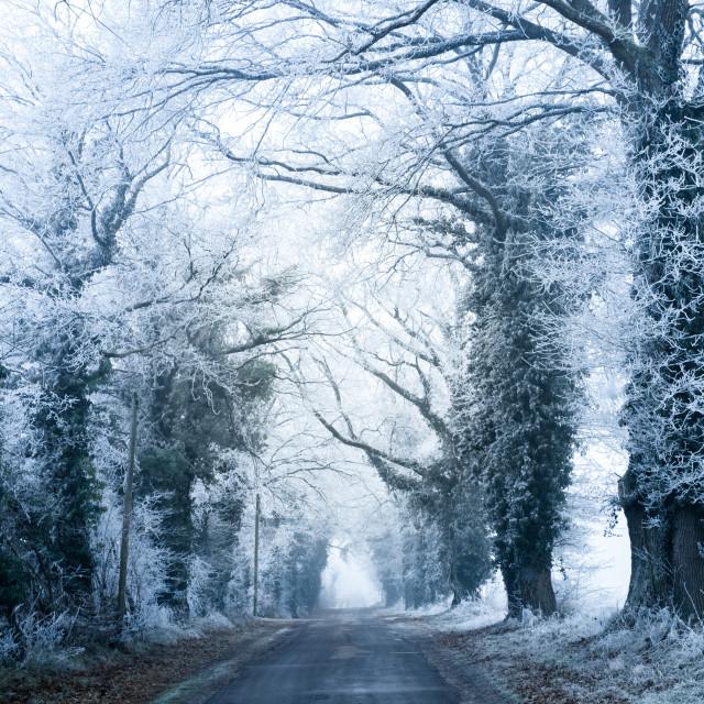 """""""frozen road - France - Nievre - Bourgogne - Burgundy"""" stock image"""