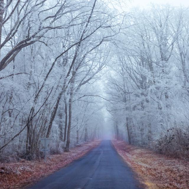 """""""road in frozen forest - France - Nievre Bourgogne - Burgundy"""" stock image"""