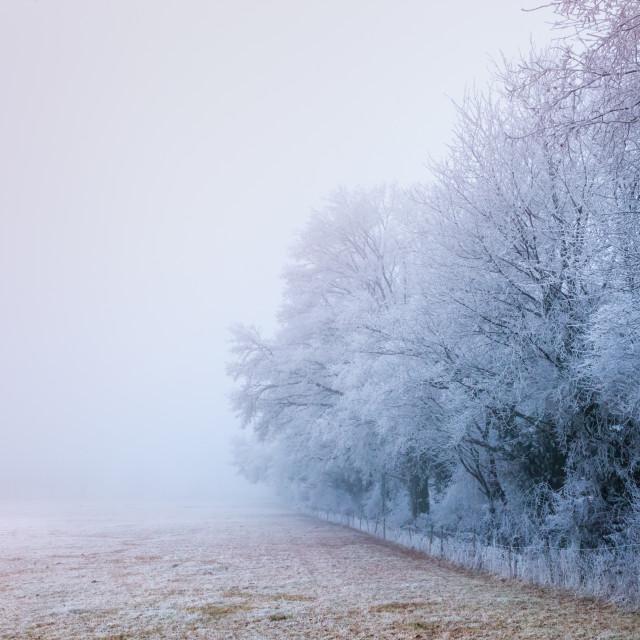 """""""frozen field - France - Nievre Bourgogne - Burgundy"""" stock image"""