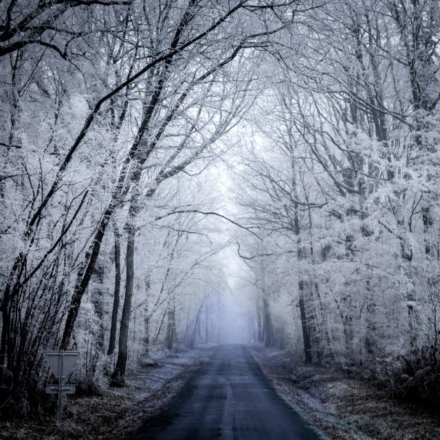 """""""frozen forest - France - Nievre Burgundy - Bourgogne"""" stock image"""