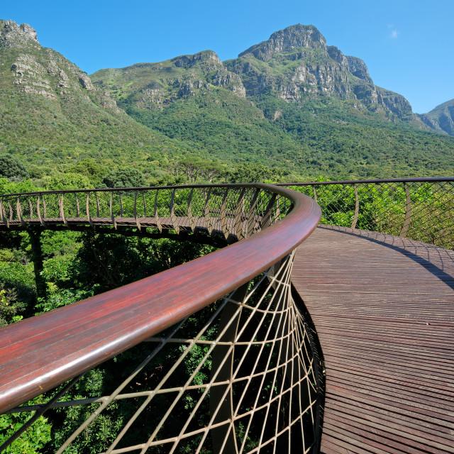 """Elevated walkway in the Kirstenbosch botanical gardens"" stock image"