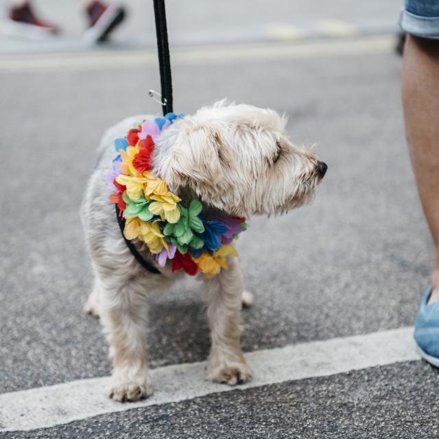 """London Pride '18 [12]"" stock image"