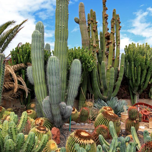 """""""Cactus garden"""" stock image"""